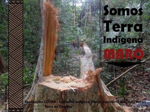 Ação é organizada em resposta ao corte de 15 árvores na TI, todas de alto valor comercial. Comunidade cobra demarcação do território há quase 15 anos.